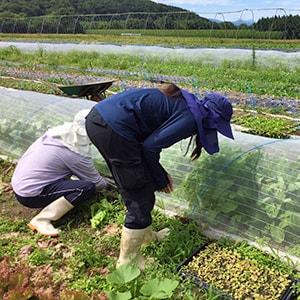 神楽農園の自然農法