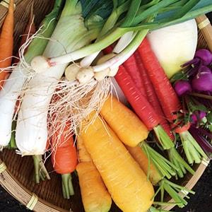菜の花畑のオーガニック野菜