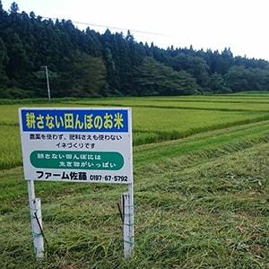 ファーム佐藤の不耕起移植栽培水田